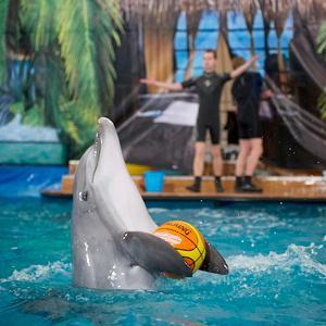 Дельфинарии, океанариумы Кубинки