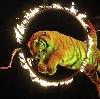 Цирки в Кубинке