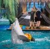 Дельфинарии, океанариумы в Кубинке
